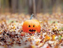 Pumpkin, Seasonal, Halloween